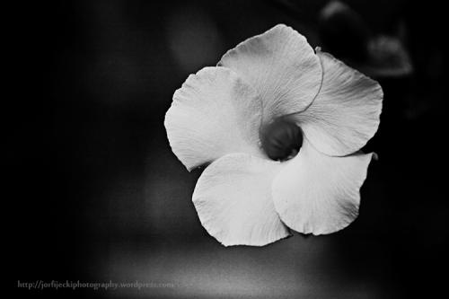 flower 2-0343 copy